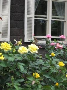 旧古河邸庭園のバラ